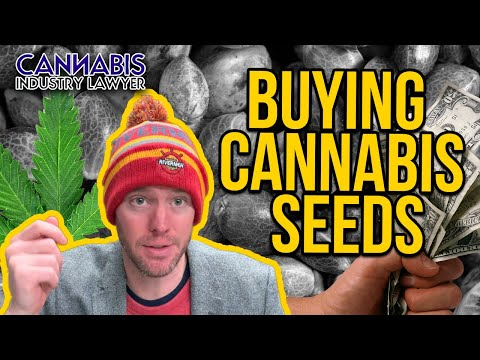 Buying Cannabis Seeds Legally