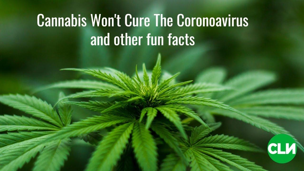 Weed Kills Coronavirus? Come on.