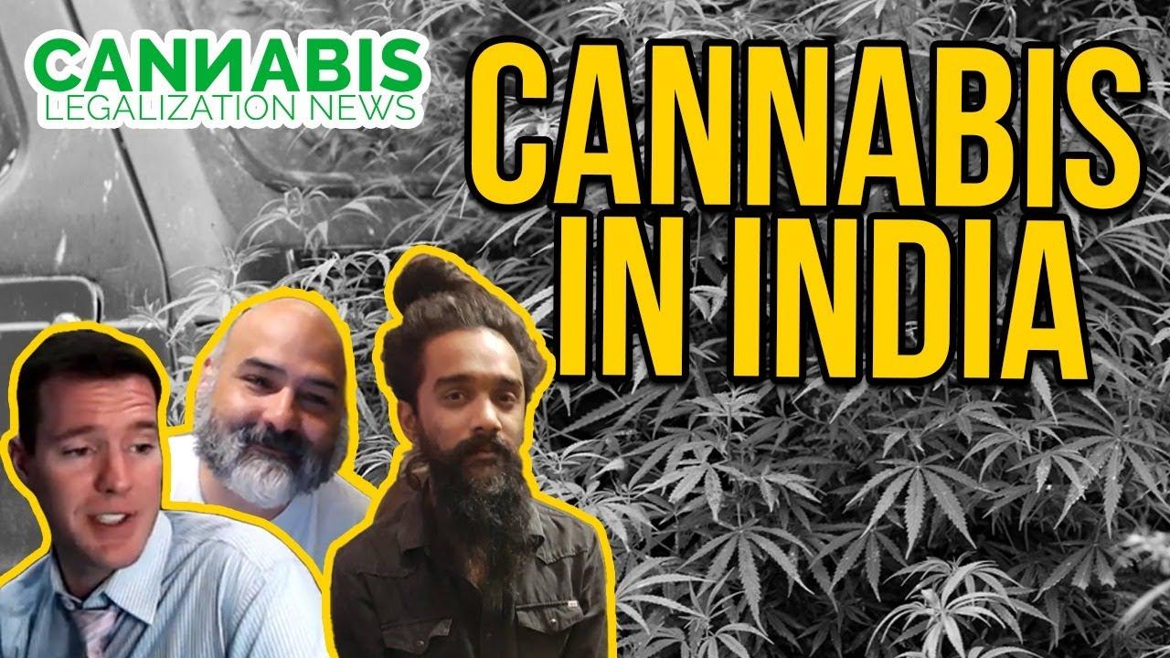 Is Cannabis Legal in India? Great Legalisation Movement - Viki Vaurora