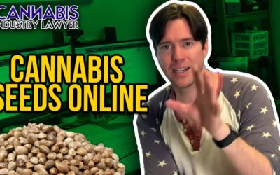 Are Online Cannabis Seeds Legal? Why cannabis seeds are everywhere online.