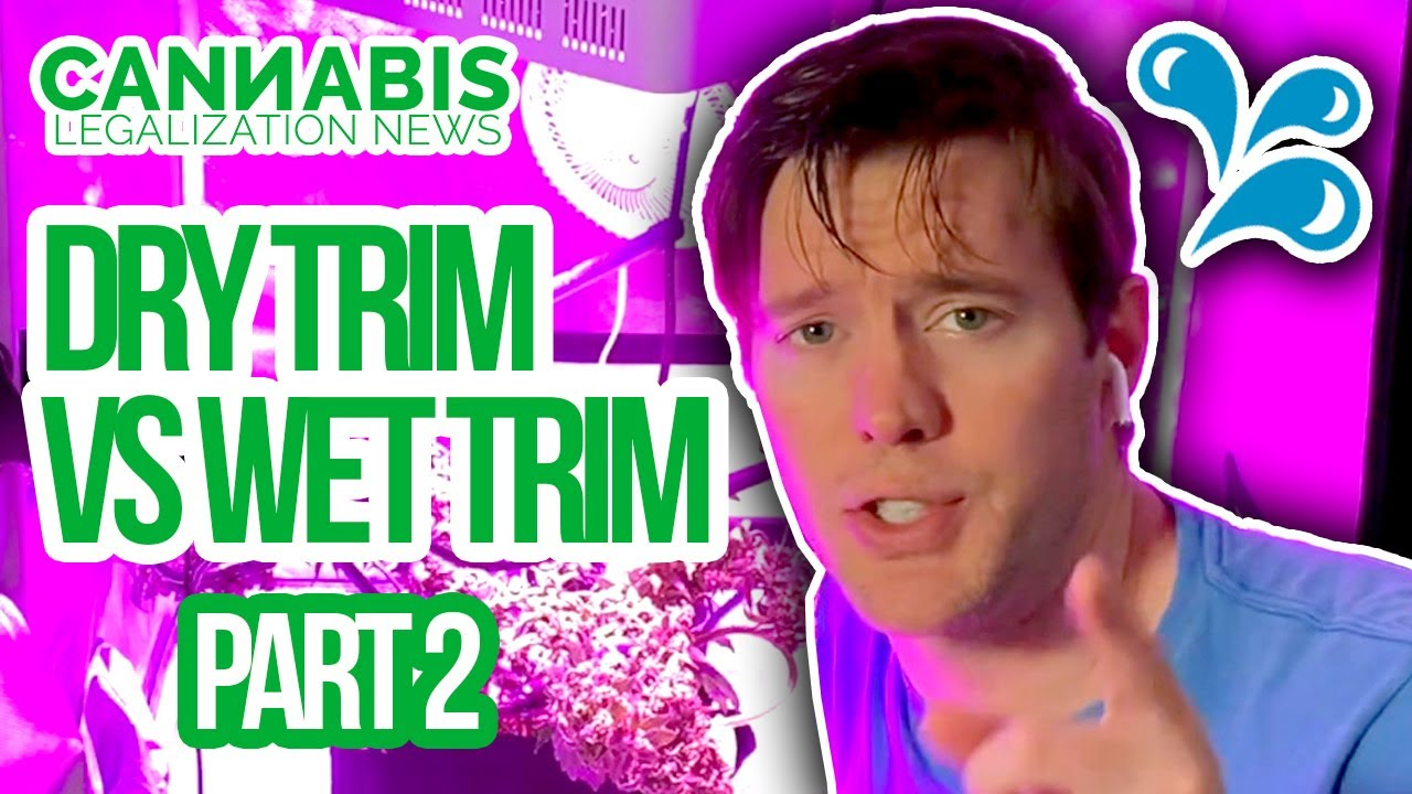 Dry Trim Vs Wet Trim Challenge - Part 2 - How to Trim Homegrown Cannabis