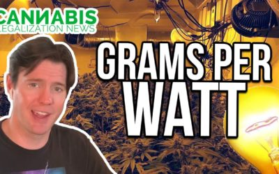 grams per watt – cannabis yield per light for harvested weight