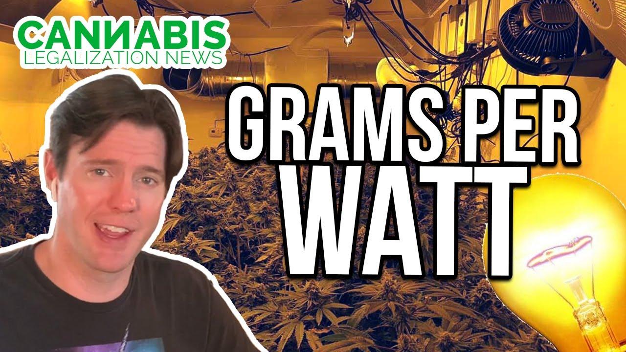 grams per watt - cannabis yield per light for harvested weight