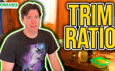 Trim Ratio – How much trim to nugs in your cannabis harvest?