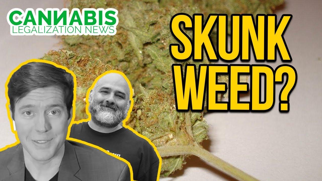 Why Cannabis Smells Like a Skunk