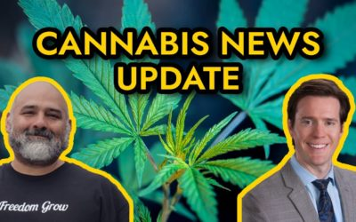 Cannabis News – Mississippi to vote on medical marijuana, Navy bans CBD products, and more