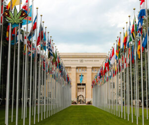 The UN voted to remove cannabis from list of harmful substances